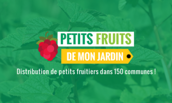 Distribution de petits fruitiers dans 17 communes bruxelloises